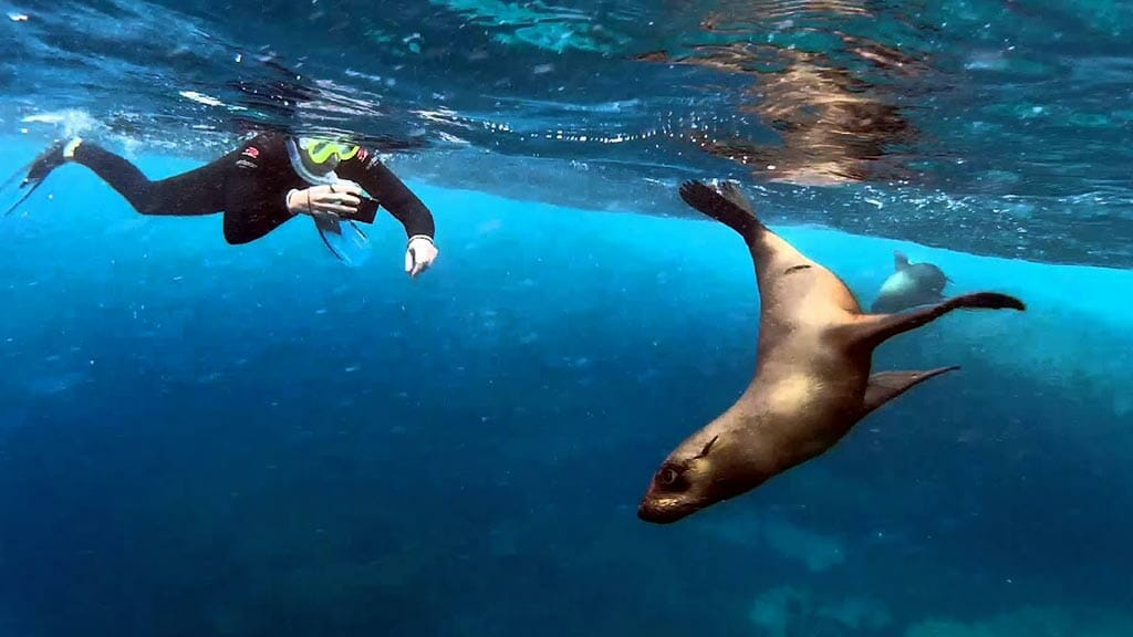 snorkeling-with-sea-lions