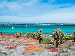 large opuntia cactus and bright red lichens on south plaza island galapagos