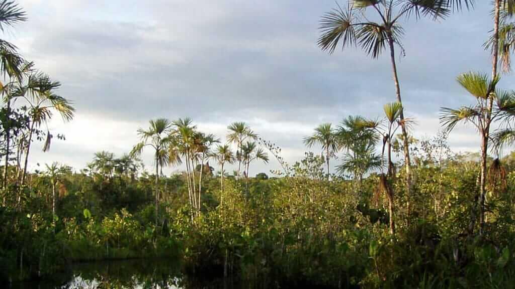 ecuador's yasuni national park in the amazon rainforest