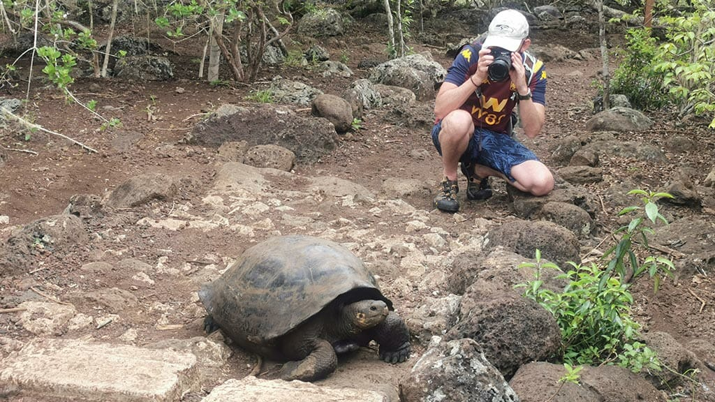 tourist taking photo of galapagos tortoise at the galapaguera tortoise center san cristobal