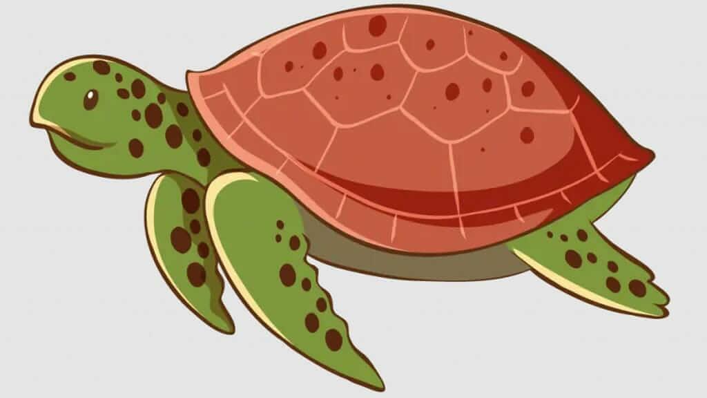 happy gringo galapagos cartoon sea turtle