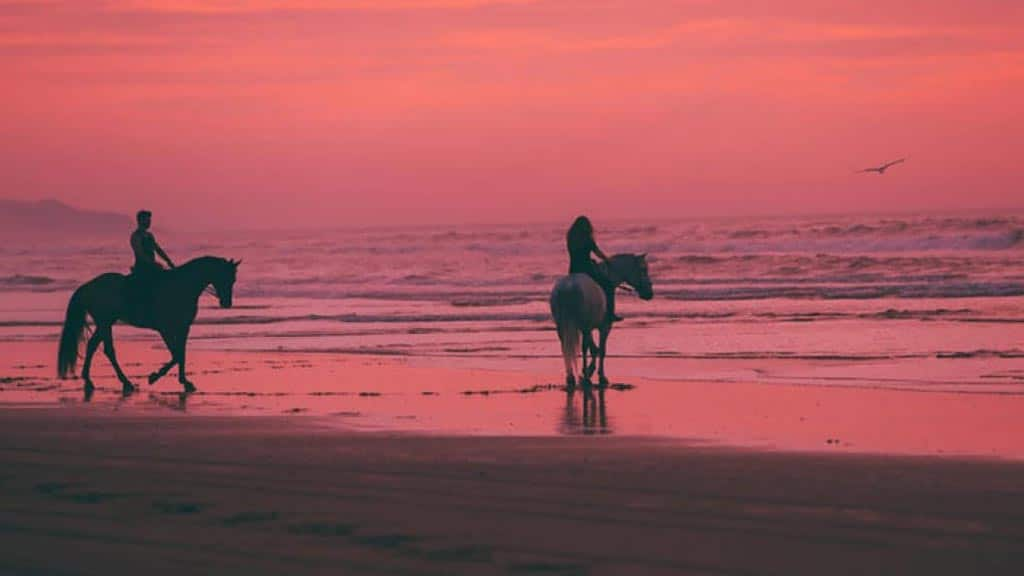 couple at sunset horseback riding galapagos