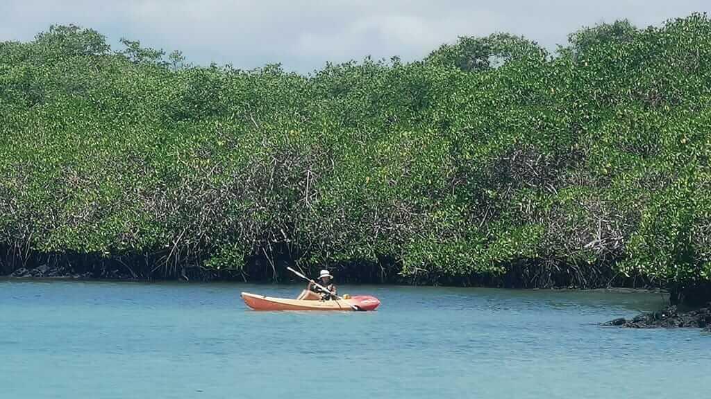 woman kayaking around mangroves at tortuga bay beach santa cruz galapagos