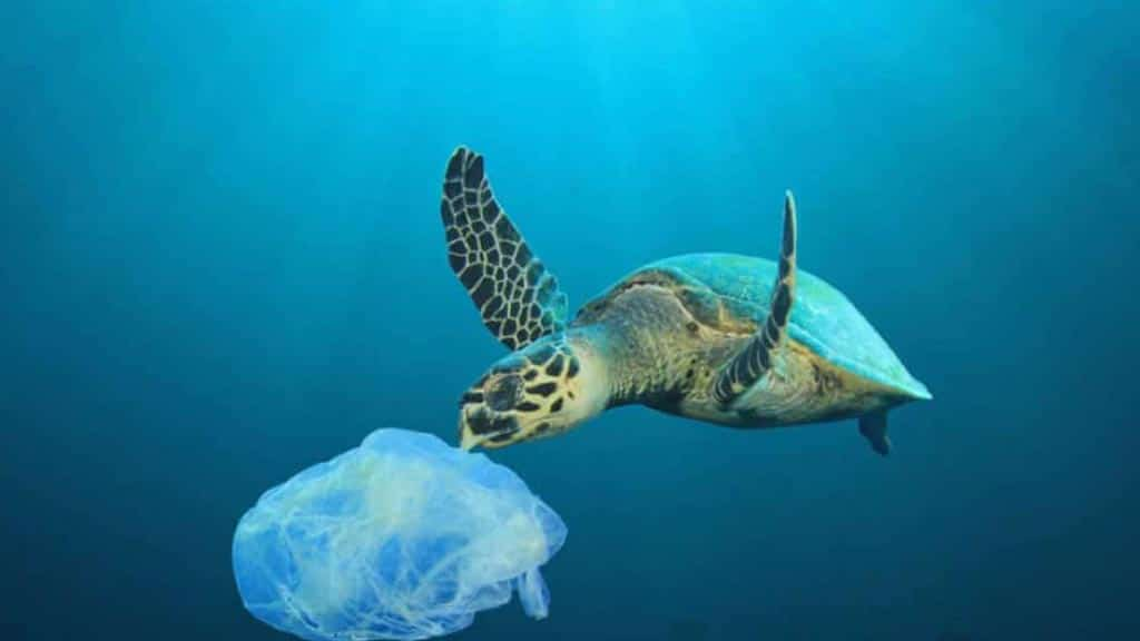 a marine turtle eating a plastic bag at the galapagos islands
