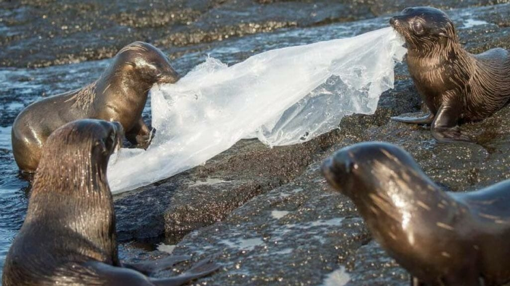 sea-lions-with-plastic