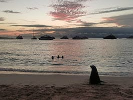 sea lion silhouette at sunset on playa mann san cristobal galapagos