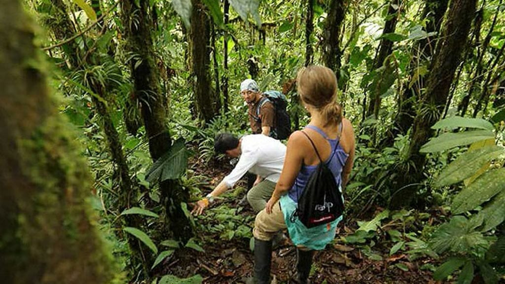 tourists on the capuchin monkey trail at mashpi lodge ecuador