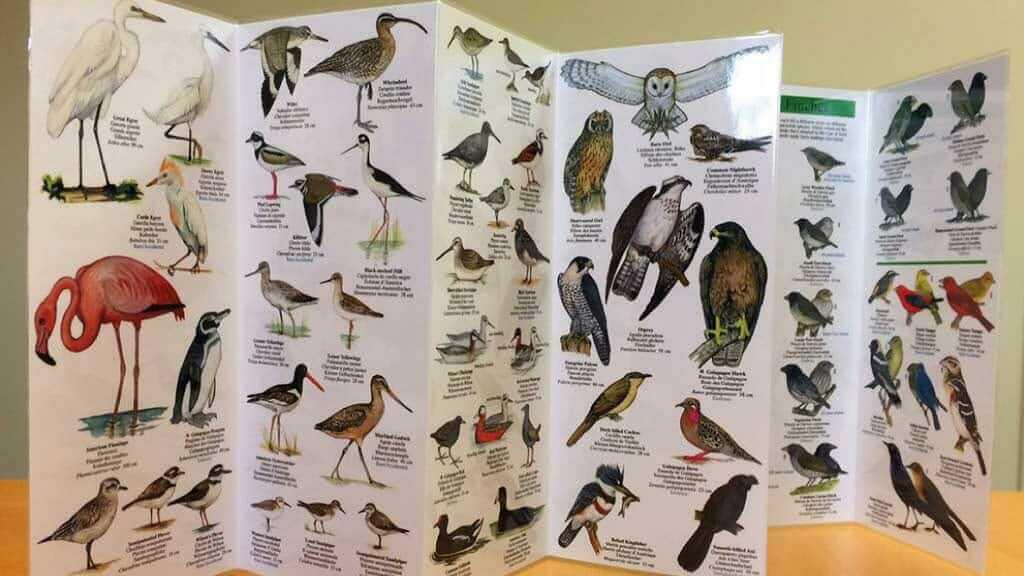 galapagos-birds-brochure
