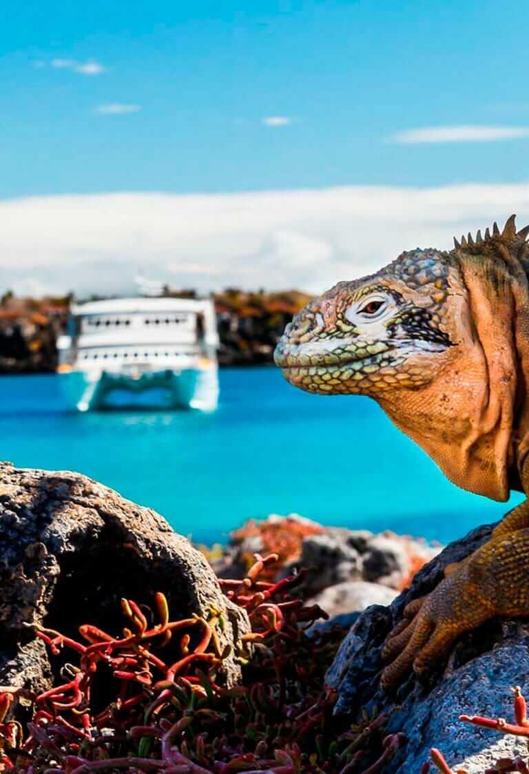 Galapagos cruises