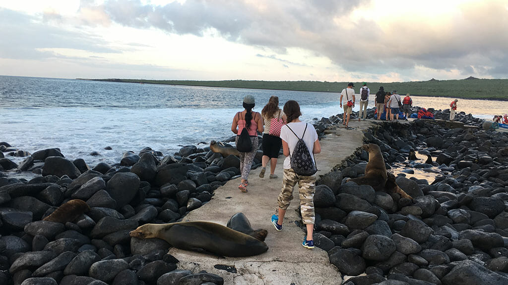 tourists step past galapagos sea lions on the legend cruise ship