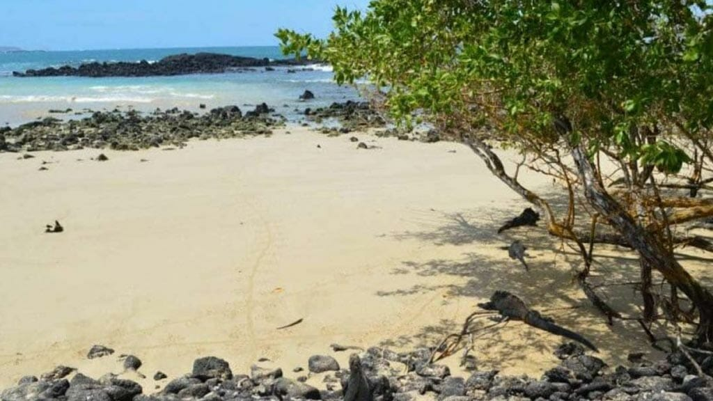 la-playita-galapagos-islands