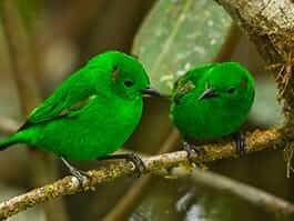 thumb-8-birds-ecuador