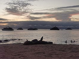 sealions in front of galapagos yachts