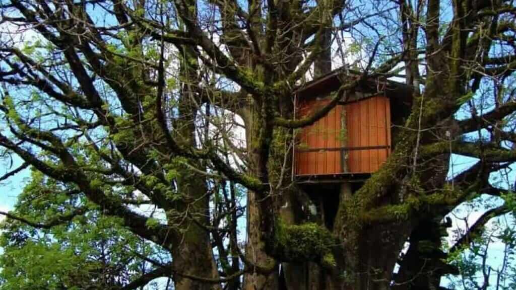 ceibo-treehouse in galapagos islands Ecuador