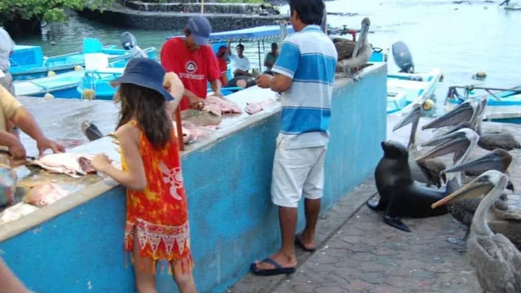 Santa Cruz fish market in the galapagos islands Ecuador
