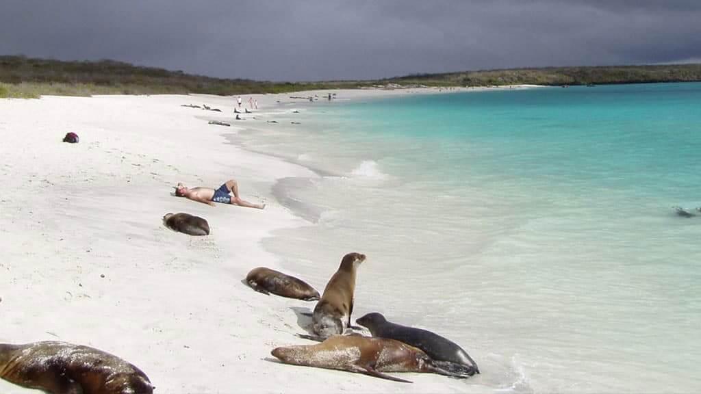 Gardner bay galapagos beach espanola island - a tourist sunbathing with sea lions