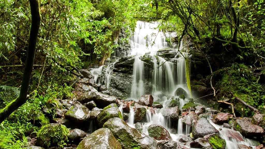 Mindo forest waterfall - Ecuador