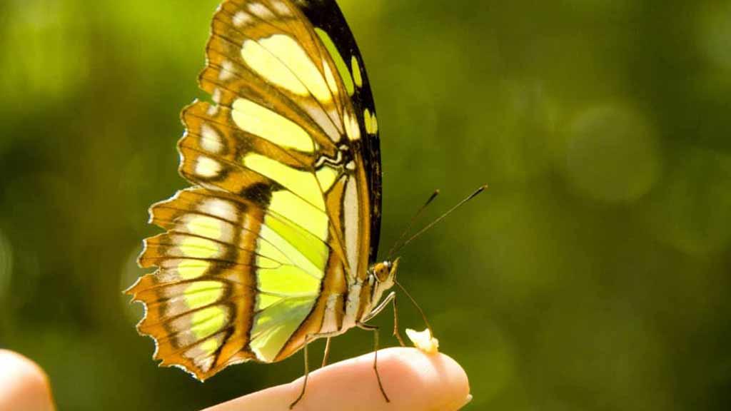 cloudforest-butterfly-ecuador-travel-destination