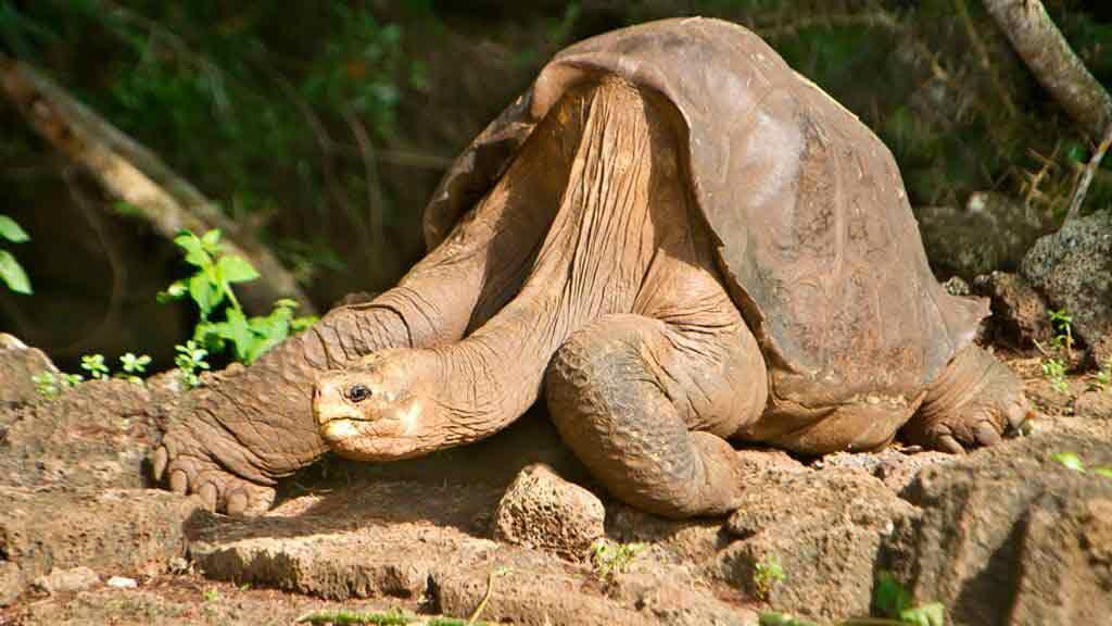 santa-cruz-hotel-land-giant-tortoise