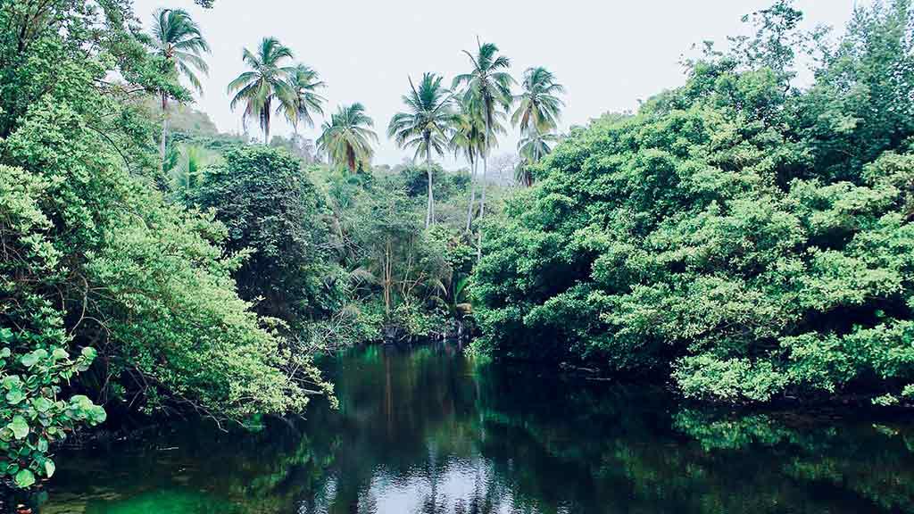 dense jungle at tayrona national park colombia