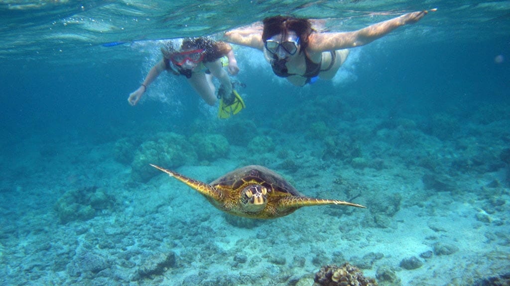 two galapagos islands snorkelers with green sea turtle