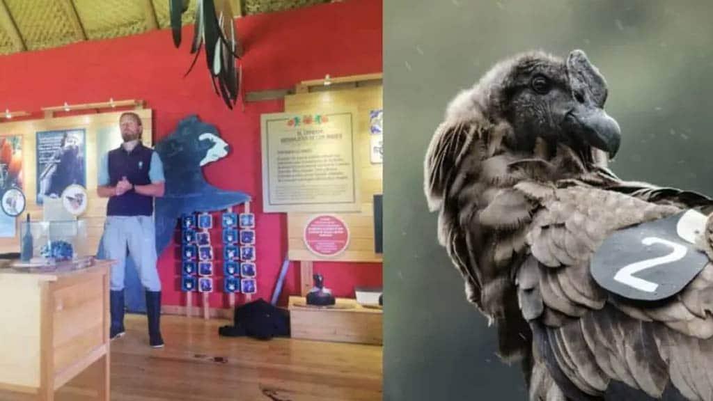 Hacienda Zuleta condors proyect