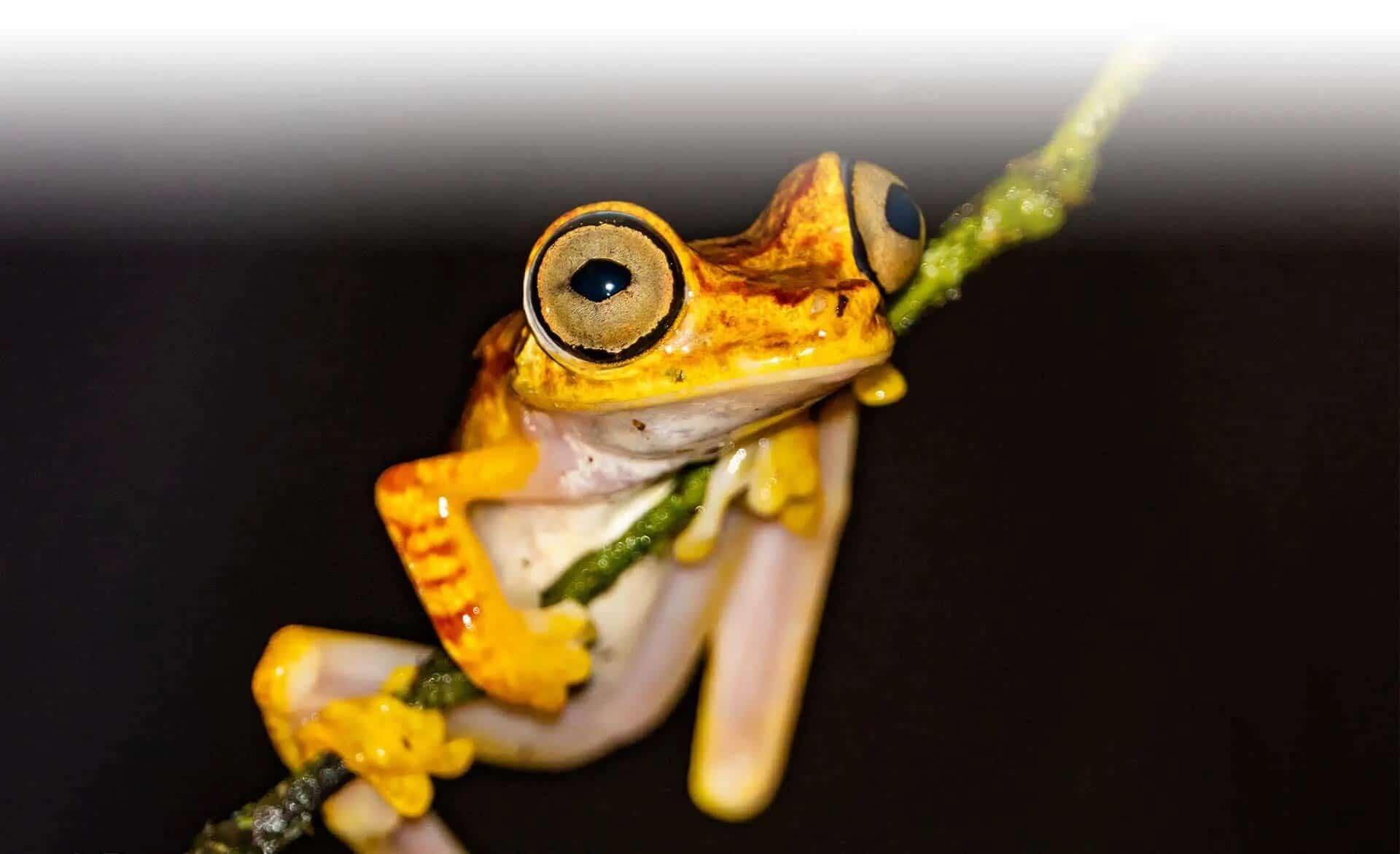 ecuador rainforest frog