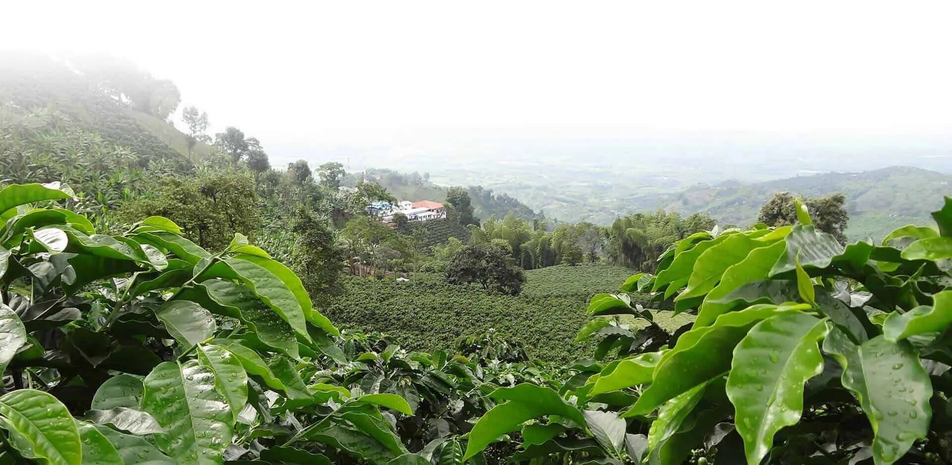 colombia coffee triangle