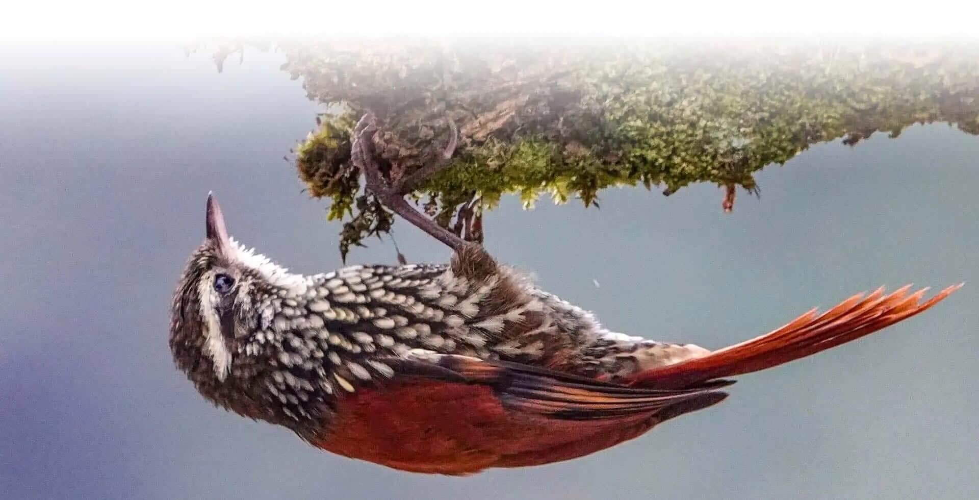 ecuador birding photography tour