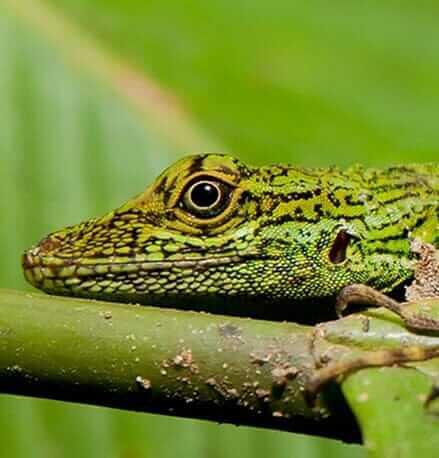 rare-amphibians-at-the-amazon-jungle-ecuador-staring-at-camera