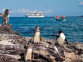 thumb how to visit galapagos -cruise ve land tour