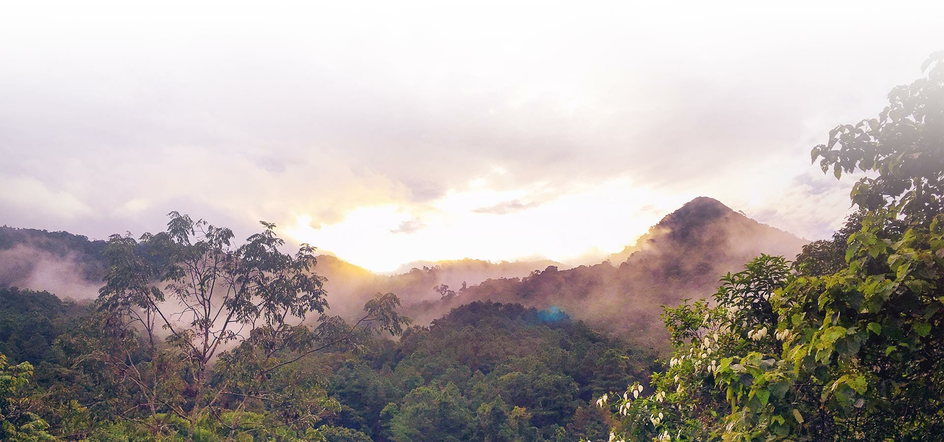 banner-cloudforest